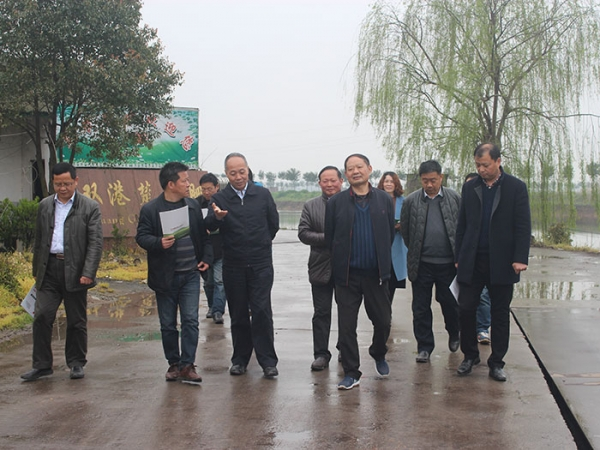 Ma Youxiang, Director of Department of Animal Husbandry, Ministry of Agriculture, Director of Satellite Bureau of Animal Husbandry and Veterinary Bureau of Hubei Province conducted field investigation on our company